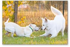 Dog Language and What You Should Know About It