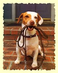 Dogs and Leashes: Always Togethr?