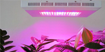 LED Grow Lights: Do You Really Need Them For Growing Plants Indoors?