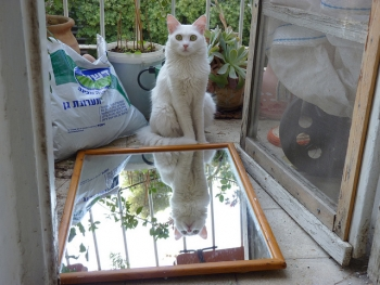 Mirror Photography-Cat