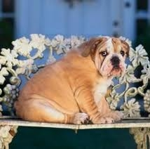 Obesity and Your Dog