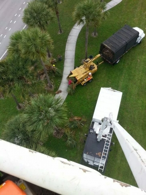 Tips to Follow For Making Your Vegetation Survive the Harsh Winters in Florida