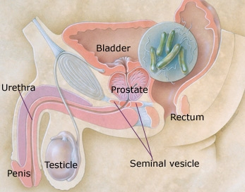 What all Men Must Know About Their Prostate