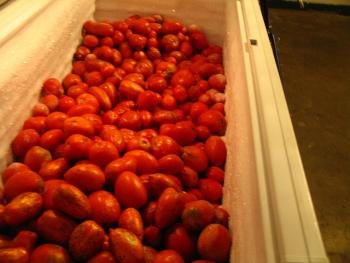 Basement Chest Freezer Full of Tomato
