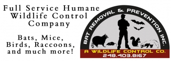 Bat Control Service Offered By Licensed Professionals