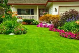 Benefits of Drought Resistant Grass Seed