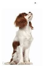 Do Your Dogs Manipulate You?