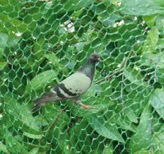 Effective use of anti-bird net