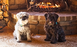 Find Amazing Dog Friendly Accommodation In Victoria Now Online