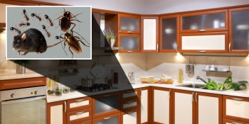 Finding a Pest Control Company in Philadelphia
