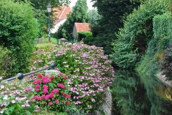 La nature le long du petit canal (Lissewege -Belgium)