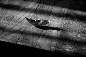 leaf on hardwood floor