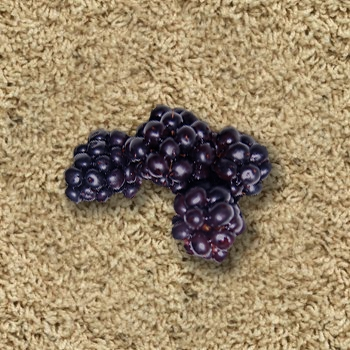 Most dreadful carpet stains and how to treat them