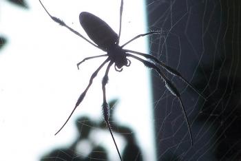 Pest Control #2