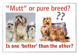 Pure Breed or Mutt?