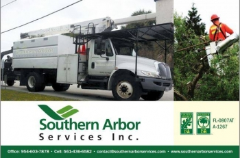 Why Certified Arborists Should Be Preferred For Servicing Tree